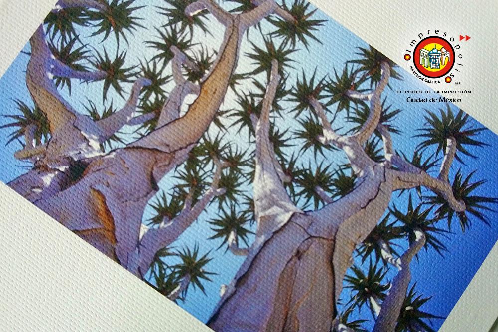 Impresion en tela canvas Daguerre Hahnemuhle