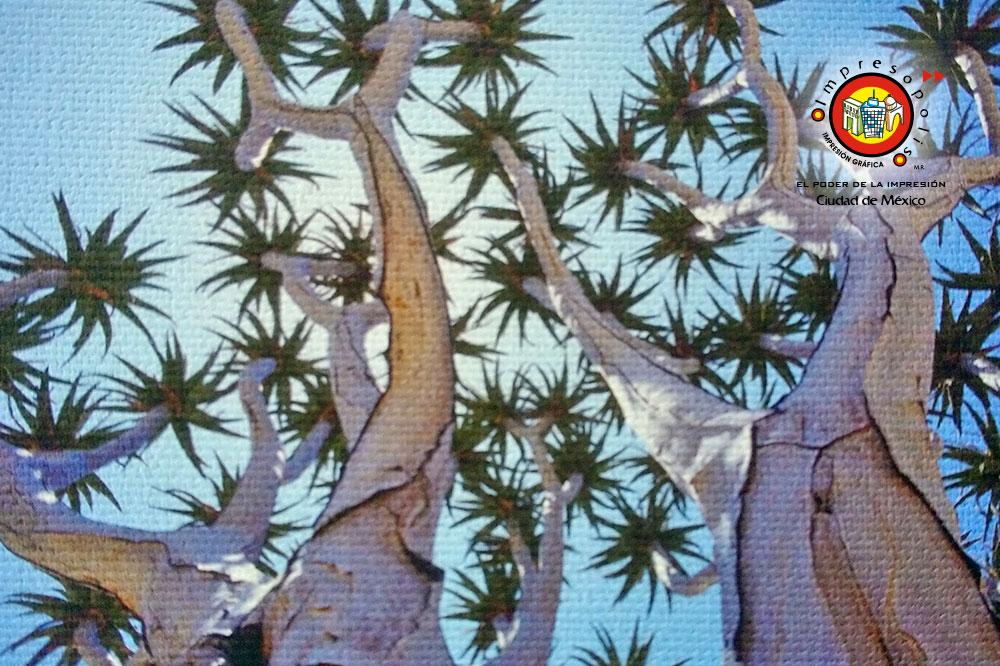 Impresion de fotografia en tela canvas Hahnemuhle